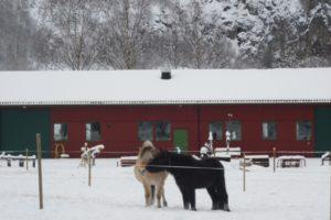 Og så vart det vinter! Ikkje at hestane brydde seg mykje om mange veker med kuldegrader og snø. Desse to har jo tjukk vinterpels!