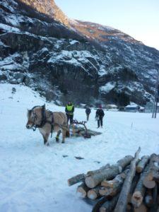 Hente tømmer med Veslemøy, ein av skulens 2 fjordhestar. Berre dei som hadde hest som fordjupningsfag var med!