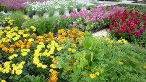 Blomstarprakt i veksthuset!!