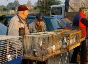Bondens marknad tidleg søndag der fjørfe og duer var hovudattraksjon
