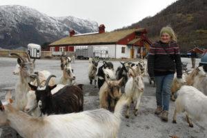 Fottur, med geiter - Man kan gå kulturstien som ligger opp fjellet ved sida av Turlidfossen på vei til utsiktspunket Stegastein i Aurland. Det er også fint å gå opp Aurlandsdalen. Du kan overnatte på Sinjarheim og på Østerbø, eller selvsagt ute i din egen sovepose.