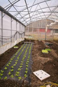 første salaten i veksthuset 15. mars