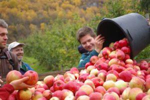 Epler i bøtter og span!!!