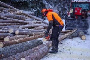 Tømmeret skal bedømmast og kappast