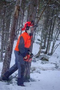 Planlegging av felling