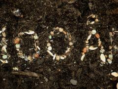 100 år i frø